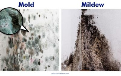 How To Remove Musty Mold and Mildew Smells Around Your Home